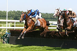 250px-Deauville-Clairefontaine_obstacle_3 (250x167, 16Kb)