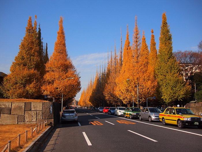 Золотая аллея Японии