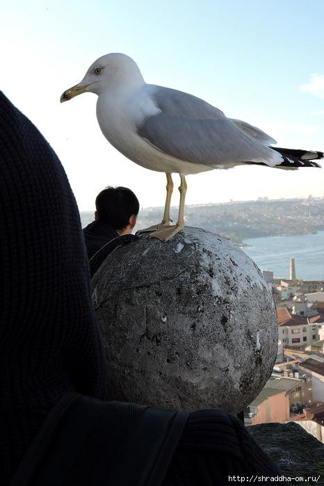 Стамбул (37) (466x700, 173Kb)