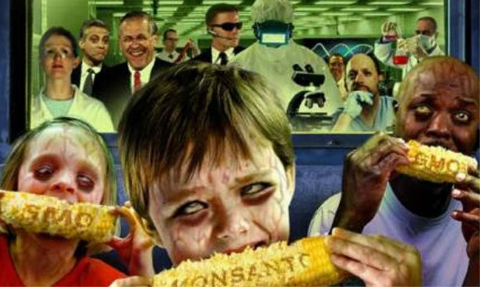 Ma_z_transg_nico_de_Monsanto (700x418, 319Kb)