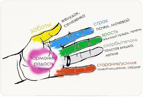 Секрет гармонии тела и души! Оказывается, человеческие органы неразрывно связаны с пальцами. (590x400, 39Kb)