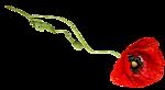 http://img1.liveinternet.ru/images/attach/c/9/126/695/126695657_3906024_0_9d0a2_4fe27e95_S.png