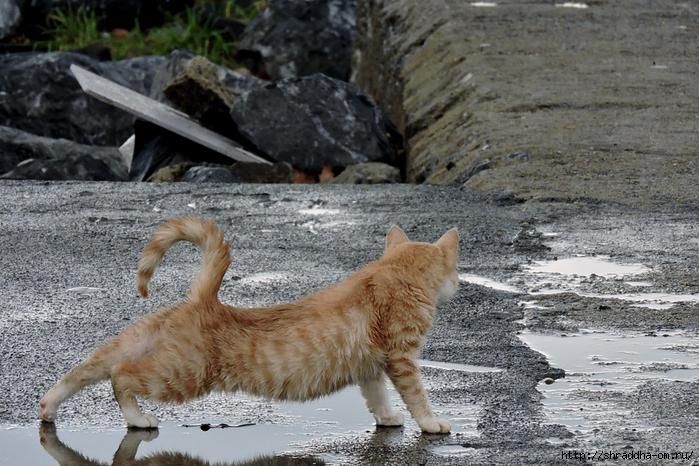 Котик (4) (700x466, 325Kb)