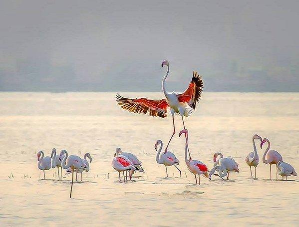 Nitin Prabhudesai (599x455, 43Kb)