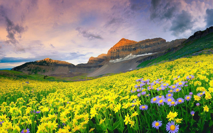 950_Valley_of_flowers_Himalaya (3) (700x437, 466Kb)