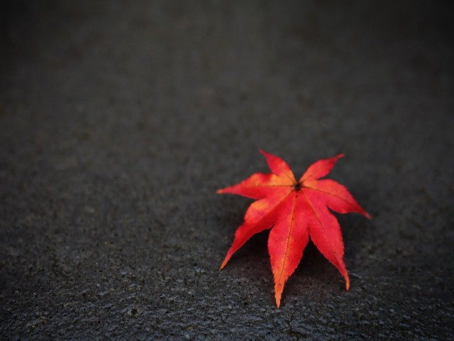 leaf_wallpaper_background_22146-640x480 (640x480, 49Kb)