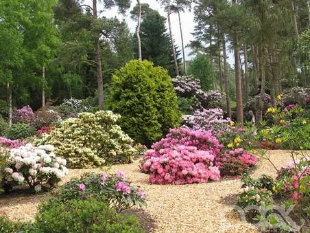 5930119_park_rododendronov_Hobbie__Avtor_PLANTFOTO_1_1_ (452x339, 77Kb)
