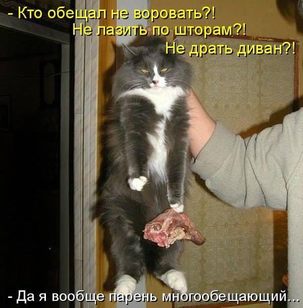 3275346_kote_v (594x604, 49Kb)