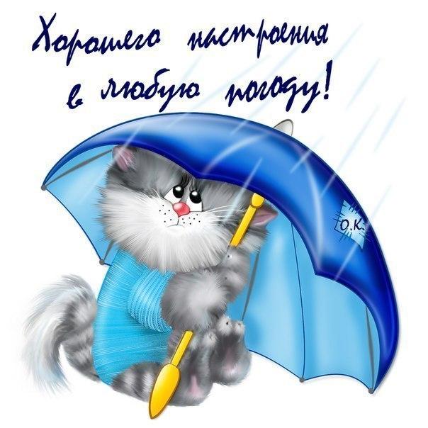 Прелестный котенок под зонтом