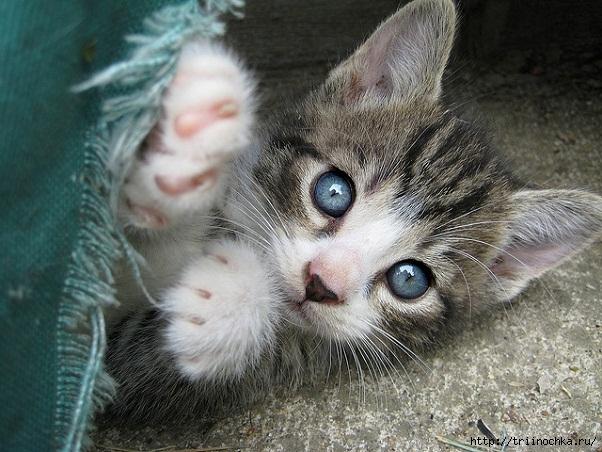 Коты-ценнейший ресурс. Они уют вырабатывают!)/4059776_kotenok (602x452, 210Kb)