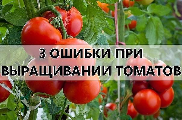помидоры (604x398, 73Kb)
