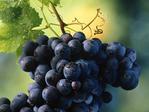 Превью 53999555_48174010_Fruits_of_the_Vine (600x450, 165Kb)