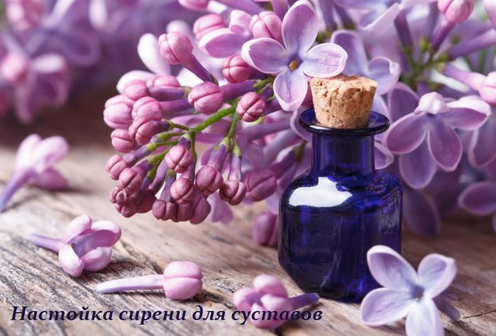 2749438_Nastoika_sireni_dlya_systavov (700x474, 519Kb)