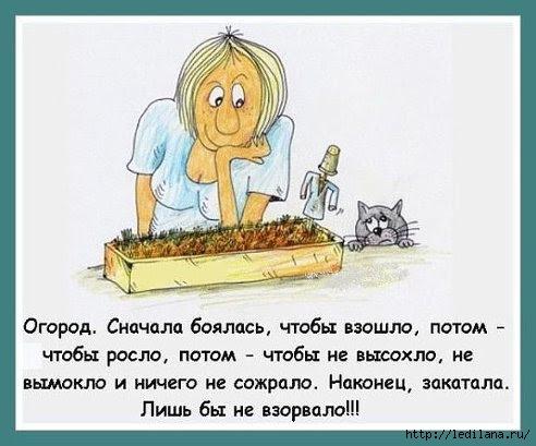 Картинки по запросу смешные картинки про огородников