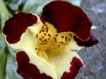 ������ orhidea a (600x449, 233Kb)