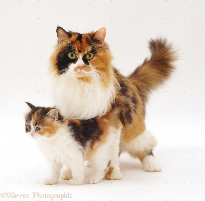 cat mouth infection symptoms