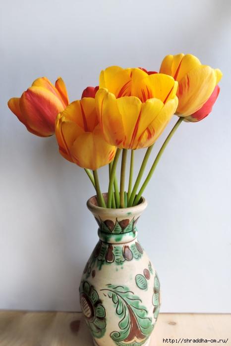 дачные тюльпаны (5) (466x700, 165Kb)