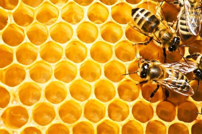 Какой вид мёда делает нас лучше?