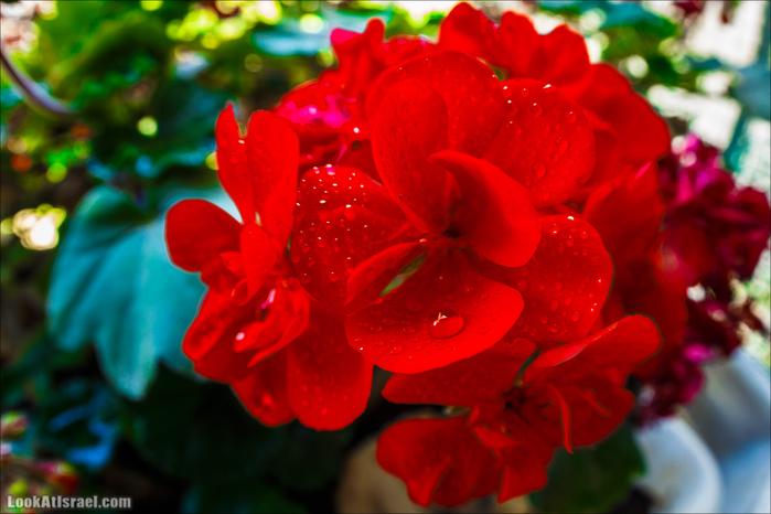 20150403_flowers_5D3_9461 (700x466, 357Kb)
