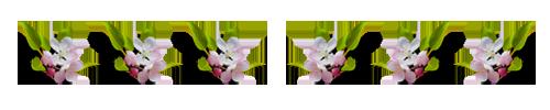 0_125f84_252b7e19_XL (500x100, 46Kb)