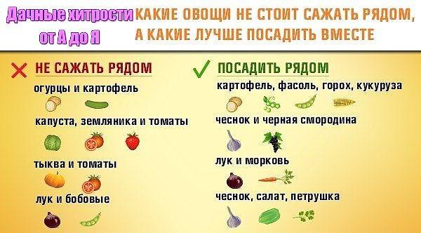 3925311_sadovodam_1 (600x332, 53Kb)