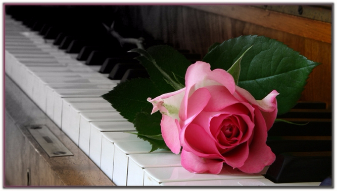 18428875_rose_and_piano (667x379, 212Kb)
