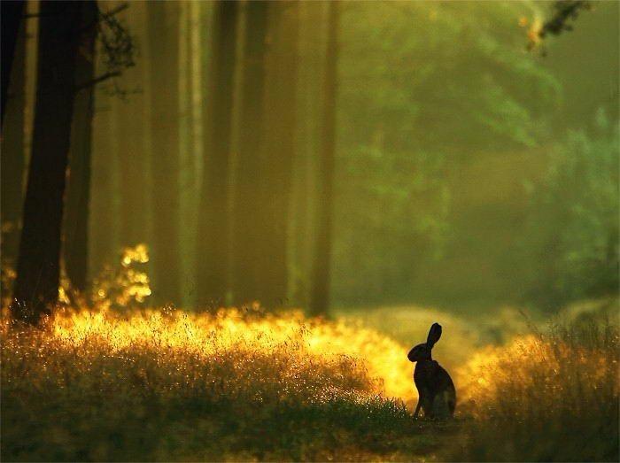 Секс гуляние с невесткой по лесу 10 фотография