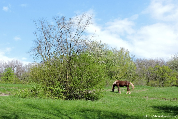 весна, май (13) (700x466, 326Kb)