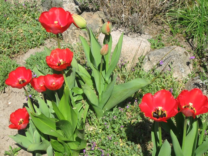 ttt spring 014 (700x525, 520Kb)