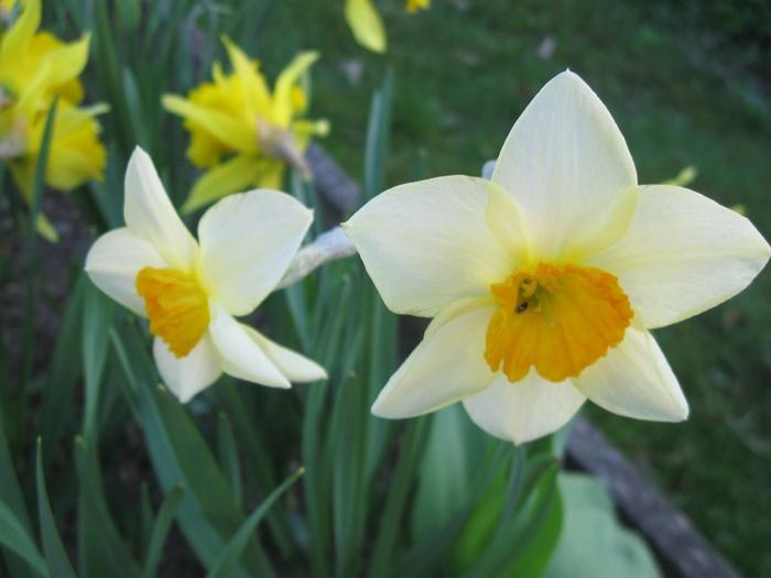 t spring 003 (700x525, 286Kb)