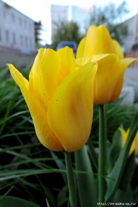 весна, май (15) (466x700, 189Kb)
