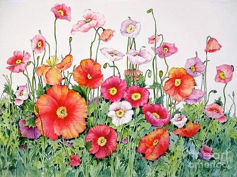poppies-sherri-crabtree (470x350, 160Kb)
