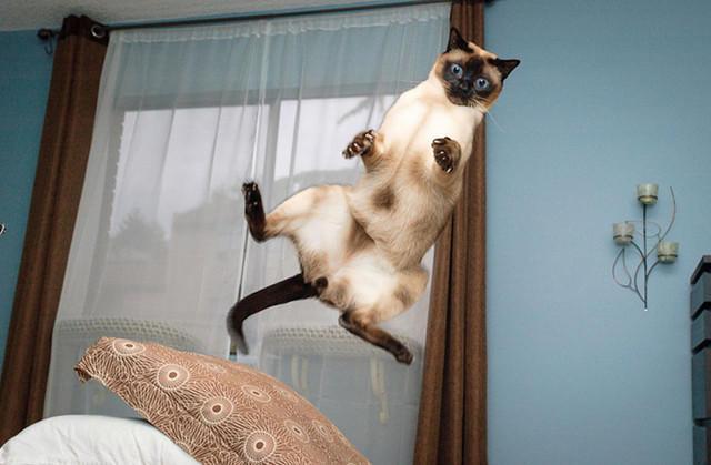 Кот летает (640x419, 125Kb)