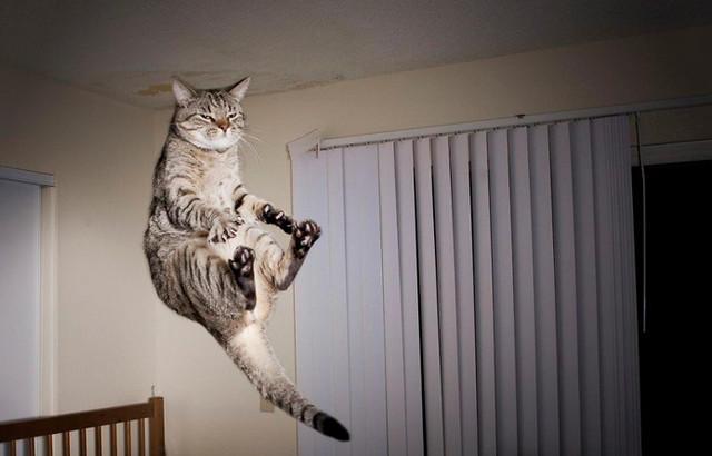 Кот летает2 (640x410, 91Kb)