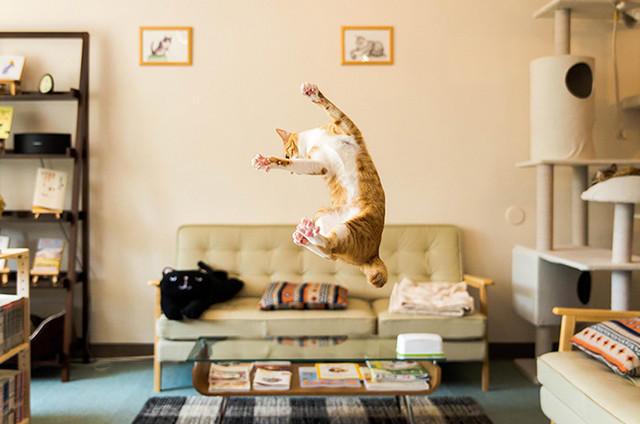 Кот летает4 (640x424, 133Kb)
