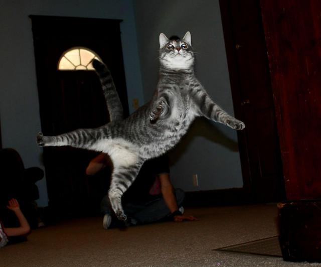 Кот летает10 (640x532, 109Kb)