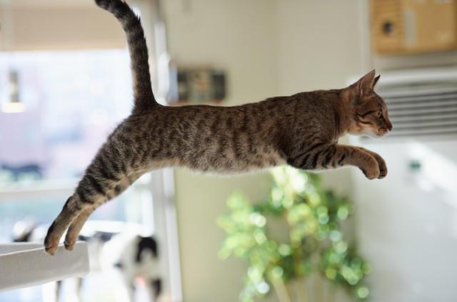 Кот летает16 (640x424, 109Kb)