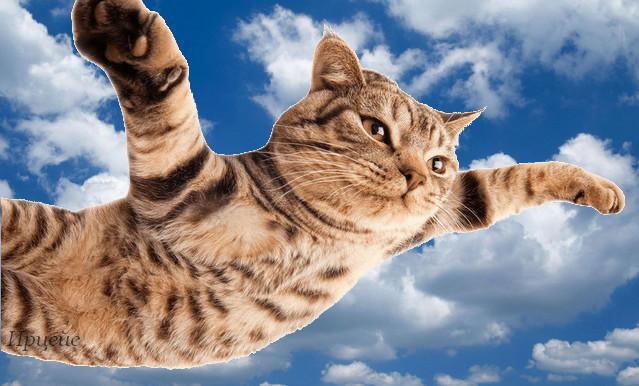Кот летает18 (639x386, 174Kb)