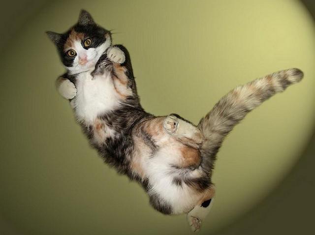 Кот летает20 (640x478, 94Kb)