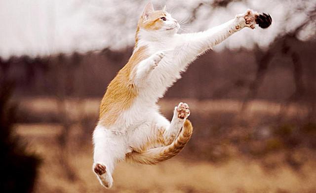 Кот летает33 (640x391, 115Kb)