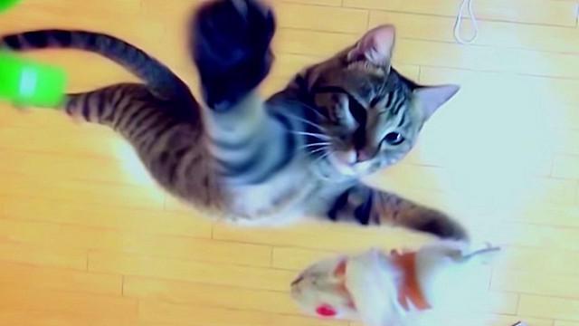 Кот летает39 (640x360, 94Kb)