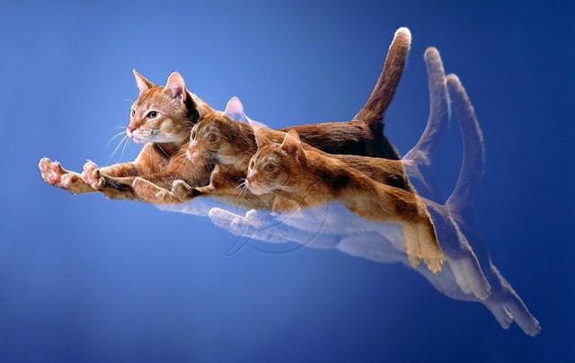 Кот летает41 (640x404, 108Kb)