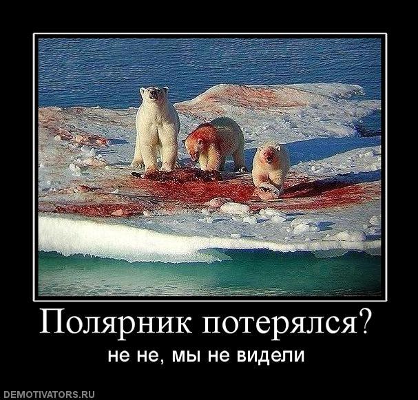 5421357_235112_polyarnikpoteryalsya (607x581, 85Kb)