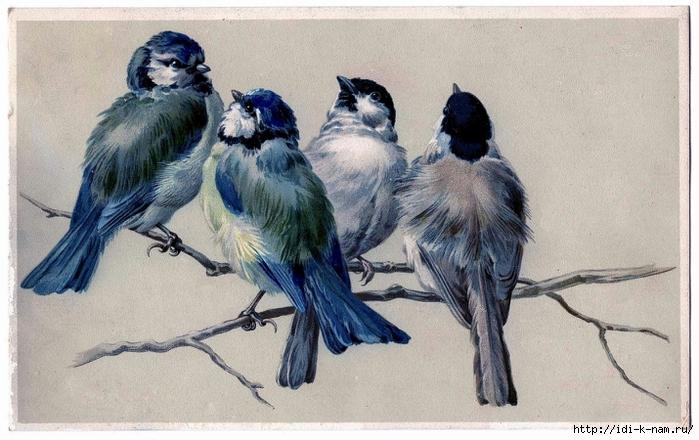 85544917_birdsonbranchgraphicsfairy006a (699x440, 261Kb)