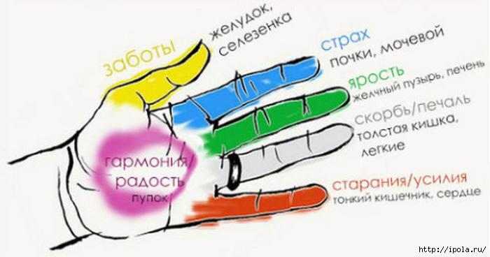 """alt=""""Точки на пальцах рук и их связь с органами человека по Джин Шин Джитсу.""""/2835299_Izmenenie_razmera_Djin_Shin_Djitsy (700x368, 88Kb)"""