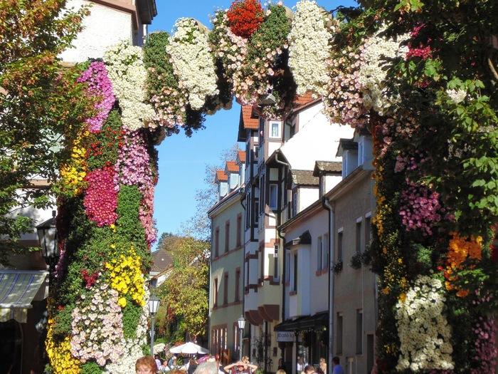 2014,chrysanthemum festival, lahr germany (2) (900x725, 204Kb)
