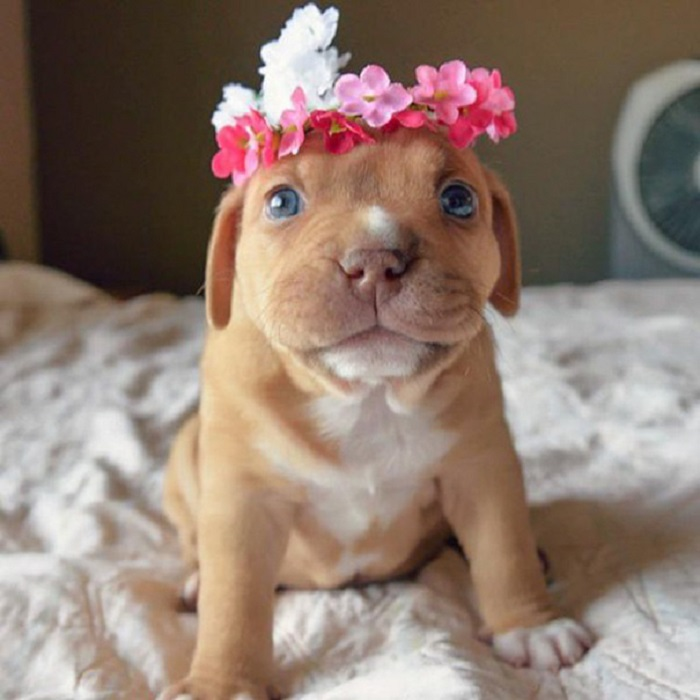 5462122_adorabledogs5 (700x700, 97Kb)