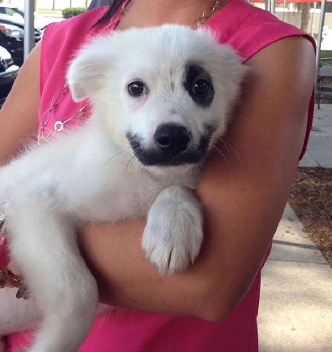 5462122_adorabledogs15 (660x700, 110Kb)