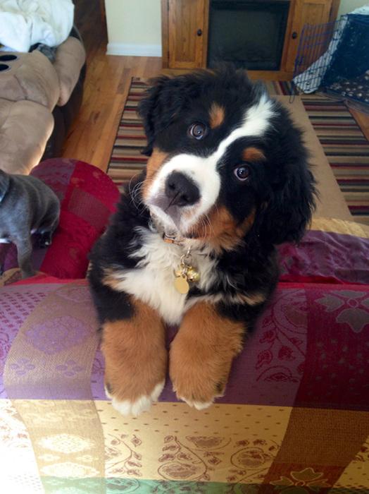 5462122_adorabledogs18 (524x700, 147Kb)