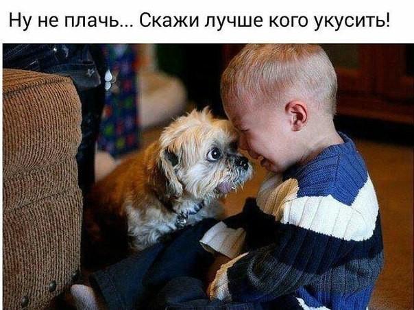 5462122_sobaki14 (604x452, 85Kb)